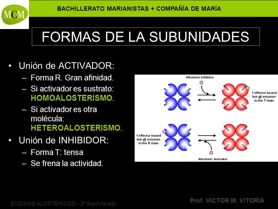 BACHILLERATO MARIANISTAS + COMPAÑÍA DE MARÍA Prof. VÍCTOR M. VITORIA ENZIMAS ALOSTÉRICOS – 2º Bachillerato FORMAS DE LA SUBUNIDADES Unión de ACTIVADOR