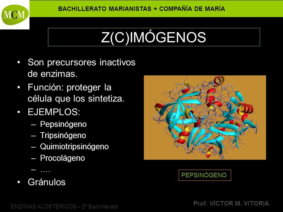 BACHILLERATO MARIANISTAS + COMPAÑÍA DE MARÍA Prof. VÍCTOR M. VITORIA ENZIMAS ALOSTÉRICOS – 2º Bachillerato Z(C)IMÓGENOS Son precursores inactivos de e