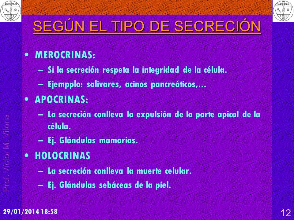 29/01/2014 19:00 12 SEGÚN EL TIPO DE SECRECIÓN MEROCRINAS: –Si la secreción respeta la integridad de la célula. –Ejempplo: salivares, acinos pancreáti