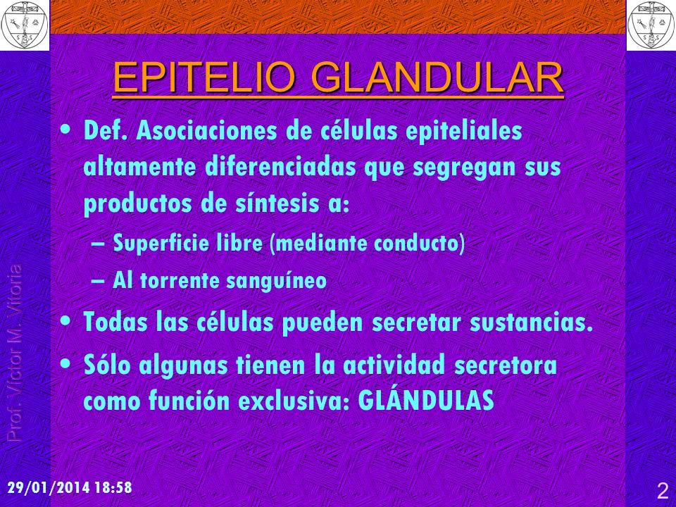 29/01/2014 19:00 2 EPITELIO GLANDULAR Def. Asociaciones de células epiteliales altamente diferenciadas que segregan sus productos de síntesis a: –Supe