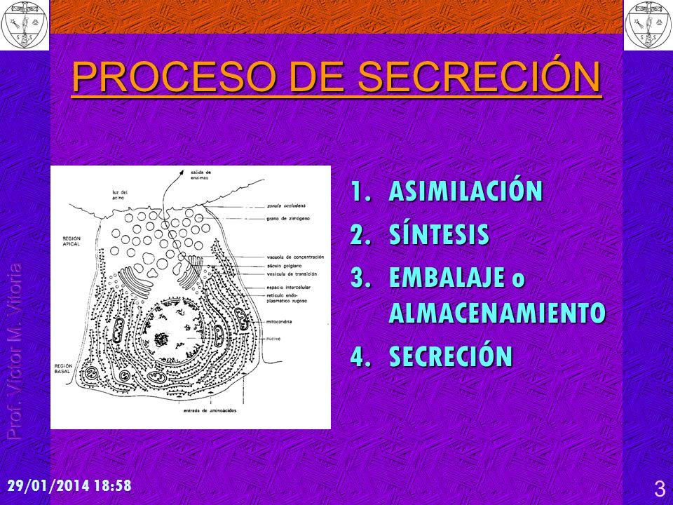 29/01/2014 19:00 3 PROCESO DE SECRECIÓN 1.ASIMILACIÓN 2.SÍNTESIS 3.EMBALAJE o ALMACENAMIENTO 4.SECRECIÓN