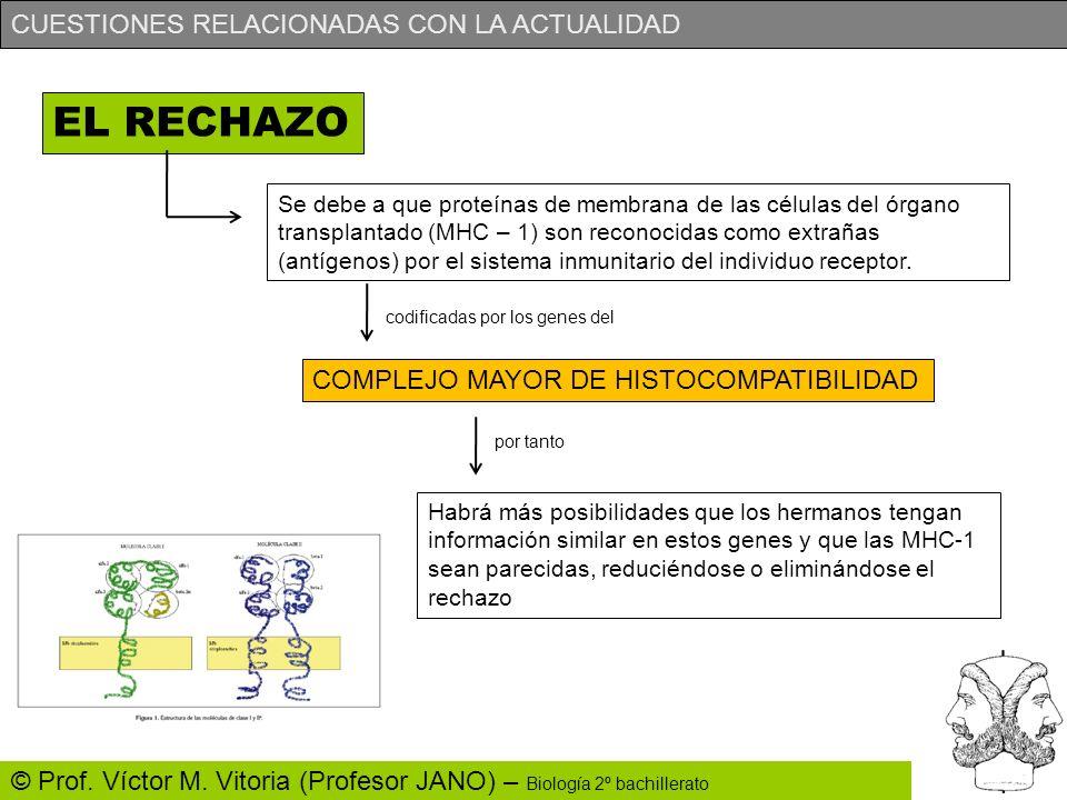 CUESTIONES RELACIONADAS CON LA ACTUALIDAD © Prof. Víctor M. Vitoria (Profesor JANO) – Biología 2º bachillerato EL RECHAZO Se debe a que proteínas de m