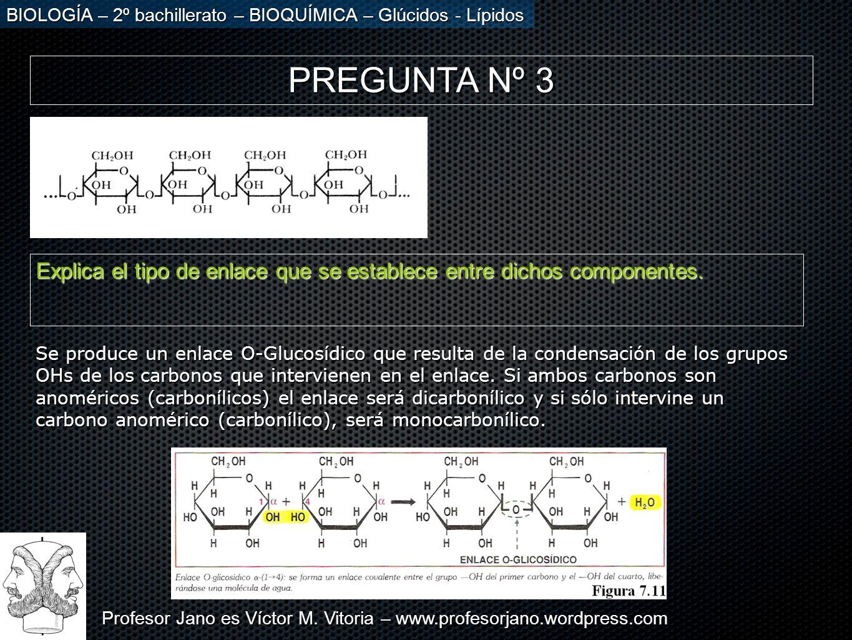Profesor Jano es Víctor M. Vitoria – www.profesorjano.wordpress.com BIOLOGÍA – 2º bachillerato – BIOQUÍMICA – Glúcidos - Lípidos PREGUNTA Nº 3 Explica