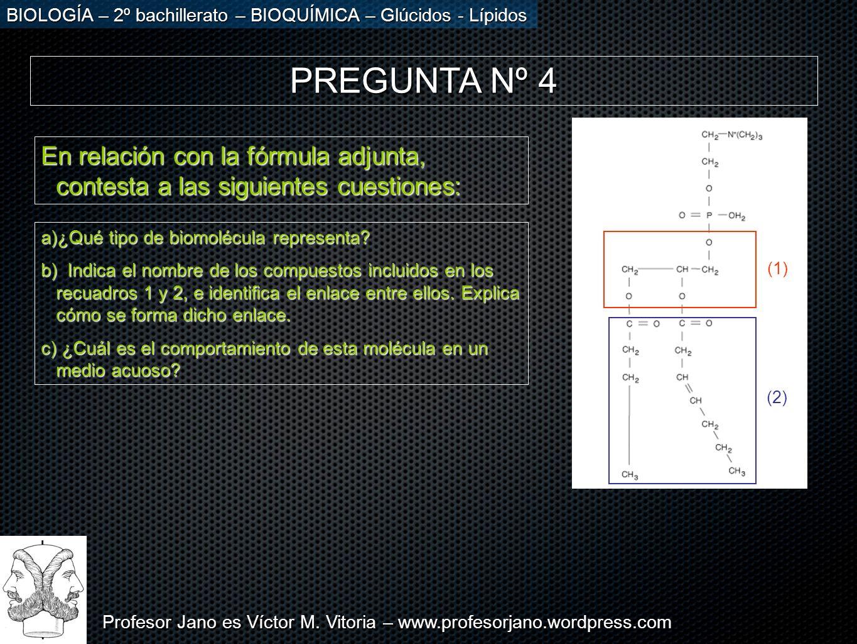 Profesor Jano es Víctor M. Vitoria – www.profesorjano.wordpress.com BIOLOGÍA – 2º bachillerato – BIOQUÍMICA – Glúcidos - Lípidos PREGUNTA Nº 4 En rela