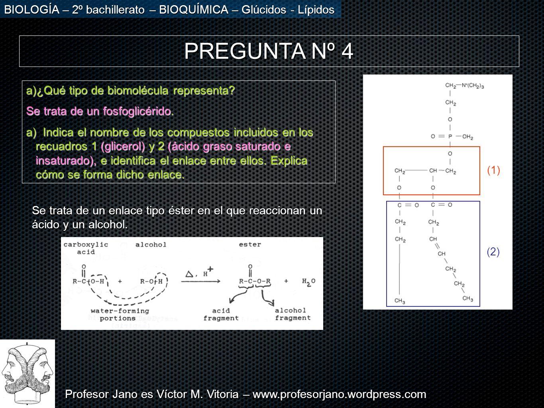 Profesor Jano es Víctor M. Vitoria – www.profesorjano.wordpress.com BIOLOGÍA – 2º bachillerato – BIOQUÍMICA – Glúcidos - Lípidos PREGUNTA Nº 4 a)¿Qué