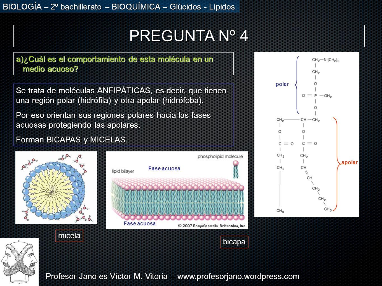 Profesor Jano es Víctor M. Vitoria – www.profesorjano.wordpress.com BIOLOGÍA – 2º bachillerato – BIOQUÍMICA – Glúcidos - Lípidos PREGUNTA Nº 4 a)¿Cuál
