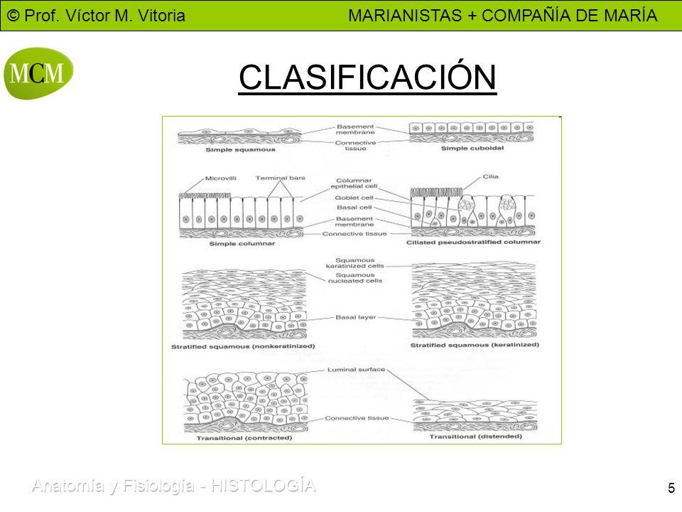 © Prof. Víctor M. Vitoria MARIANISTAS + COMPAÑÍA DE MARÍA 5 CLASIFICACIÓN