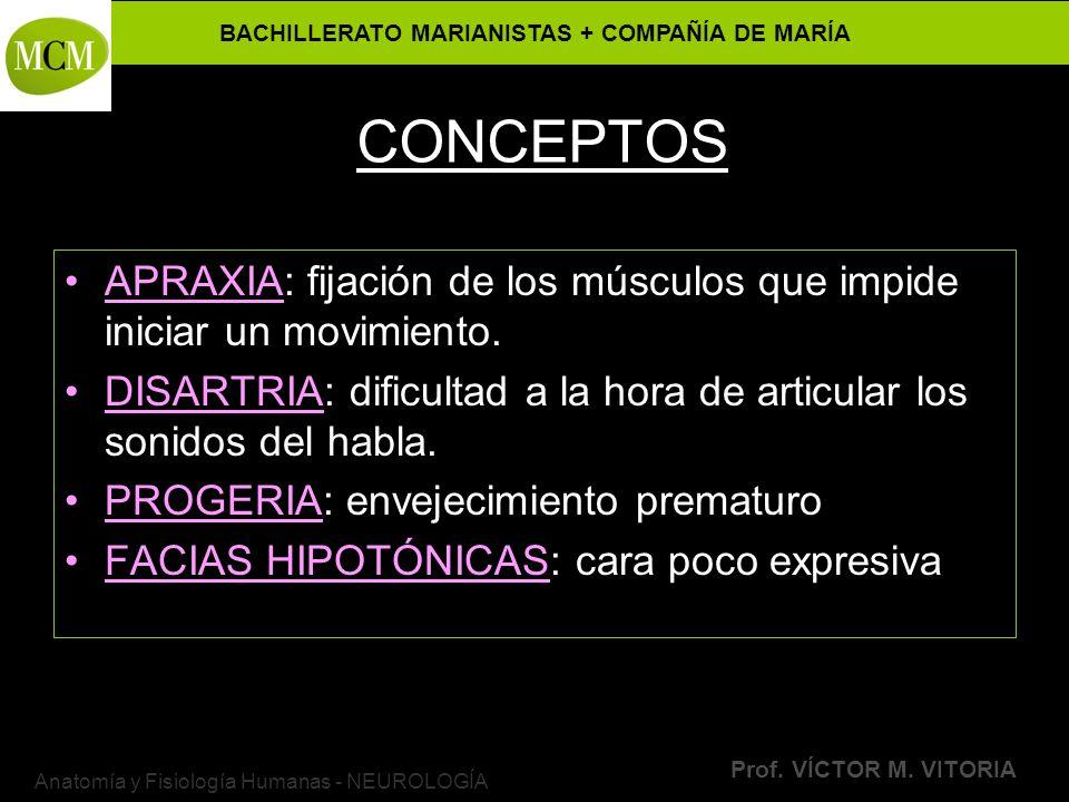 BACHILLERATO MARIANISTAS + COMPAÑÍA DE MARÍA Prof. VÍCTOR M. VITORIA Anatomía y Fisiología Humanas - NEUROLOGÍA CONCEPTOS APRAXIA: fijación de los mús