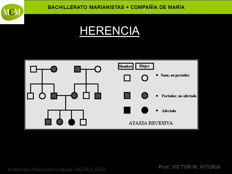 BACHILLERATO MARIANISTAS + COMPAÑÍA DE MARÍA Prof. VÍCTOR M. VITORIA Anatomía y Fisiología Humanas - NEUROLOGÍA HERENCIA