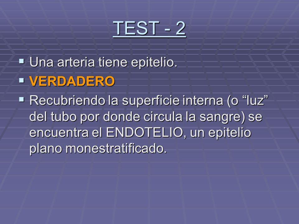TEST - 2 Una arteria tiene epitelio. Una arteria tiene epitelio. VERDADERO VERDADERO Recubriendo la superficie interna (o luz del tubo por donde circu
