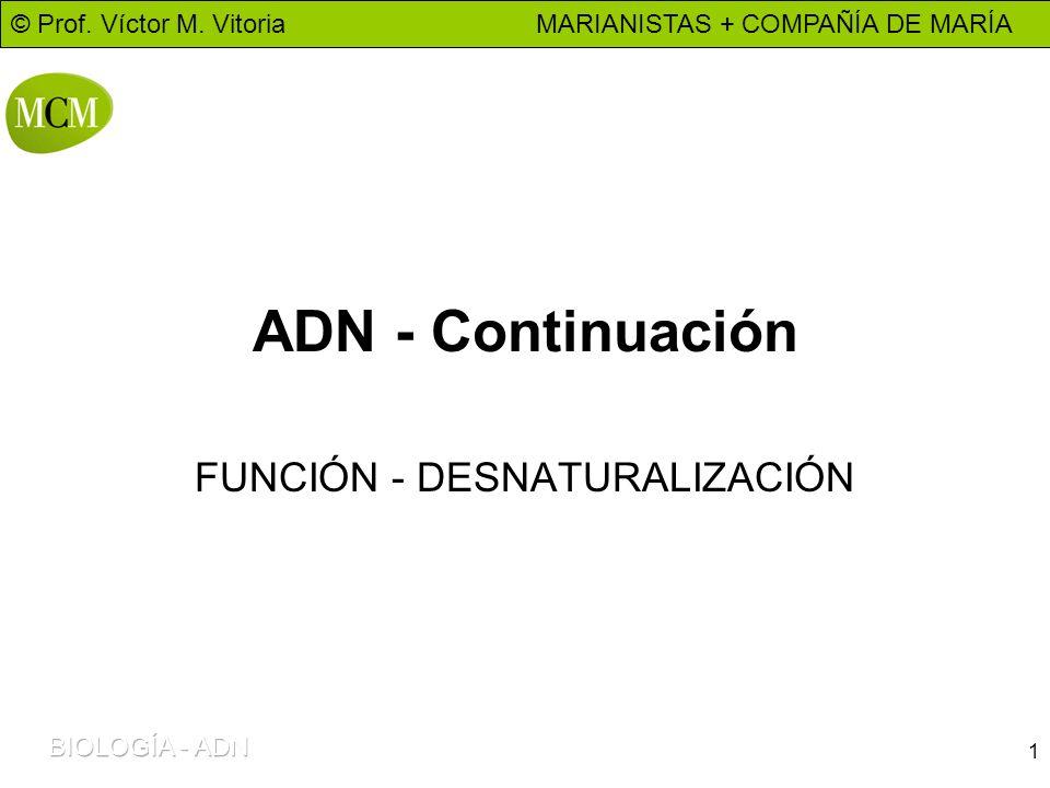 © Prof. Víctor M. Vitoria MARIANISTAS + COMPAÑÍA DE MARÍA 1 ADN - Continuación FUNCIÓN - DESNATURALIZACIÓN