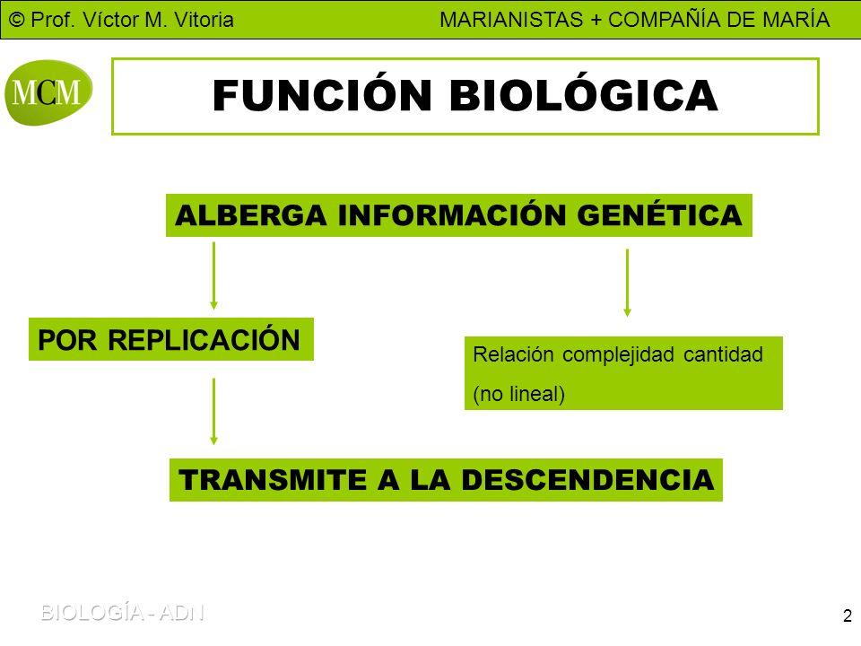 © Prof. Víctor M. Vitoria MARIANISTAS + COMPAÑÍA DE MARÍA 2 FUNCIÓN BIOLÓGICA ALBERGA INFORMACIÓN GENÉTICA POR REPLICACIÓN Relación complejidad cantid
