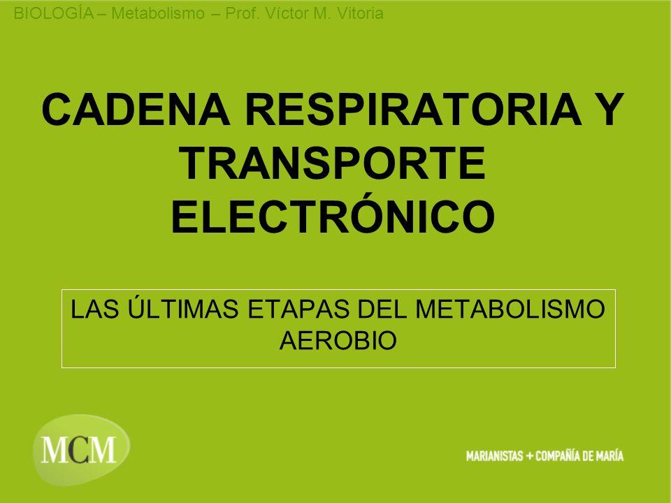 BIOLOGÍA – Metabolismo – Prof. Víctor M. Vitoria CADENA RESPIRATORIA Y TRANSPORTE ELECTRÓNICO LAS ÚLTIMAS ETAPAS DEL METABOLISMO AEROBIO