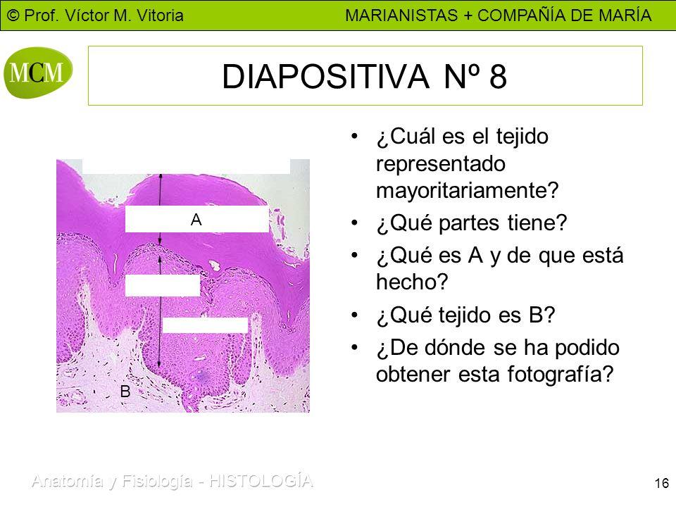 © Prof. Víctor M. Vitoria MARIANISTAS + COMPAÑÍA DE MARÍA 16 DIAPOSITIVA Nº 8 ¿Cuál es el tejido representado mayoritariamente? ¿Qué partes tiene? ¿Qu