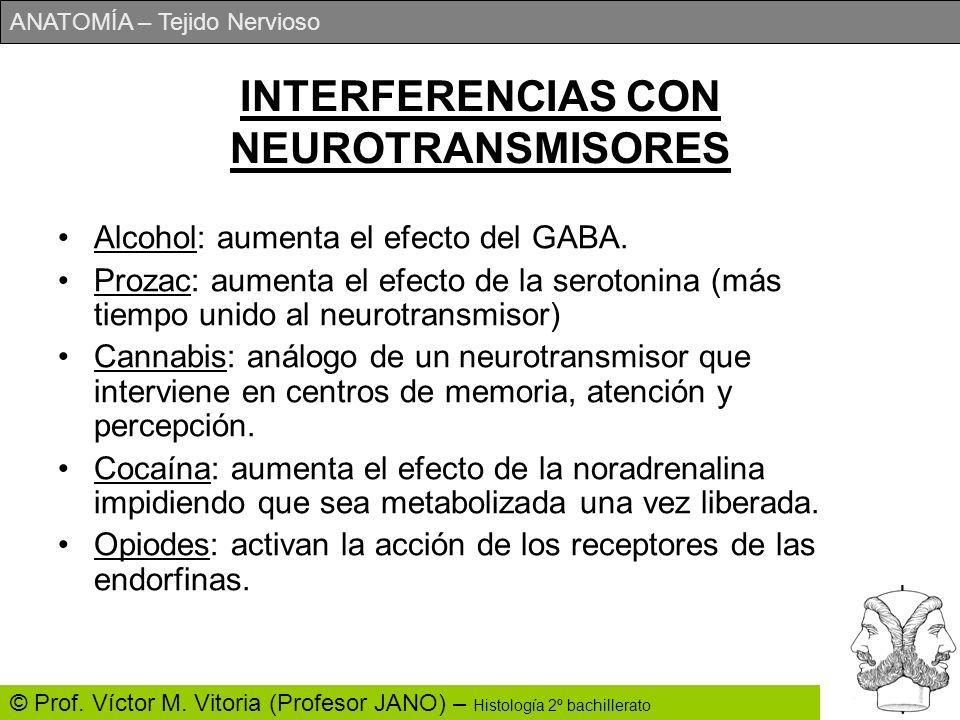 ANATOMÍA – Tejido Nervioso © Prof. Víctor M. Vitoria (Profesor JANO) – Histología 2º bachillerato INTERFERENCIAS CON NEUROTRANSMISORES Alcohol: aument