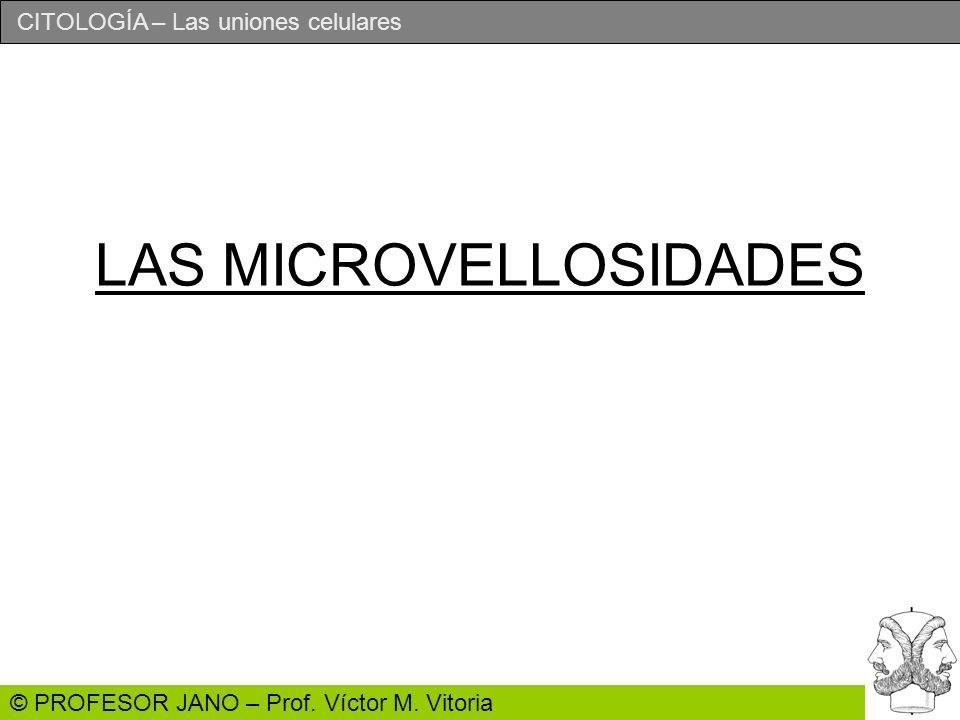 CITOLOGÍA – Las uniones celulares © PROFESOR JANO – Prof. Víctor M. Vitoria LAS MICROVELLOSIDADES