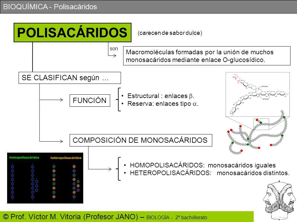 BIOQUÍMICA - Polisacáridos © Prof. Víctor M. Vitoria (Profesor JANO) – BIOLOGÍA - 2º bachillerato