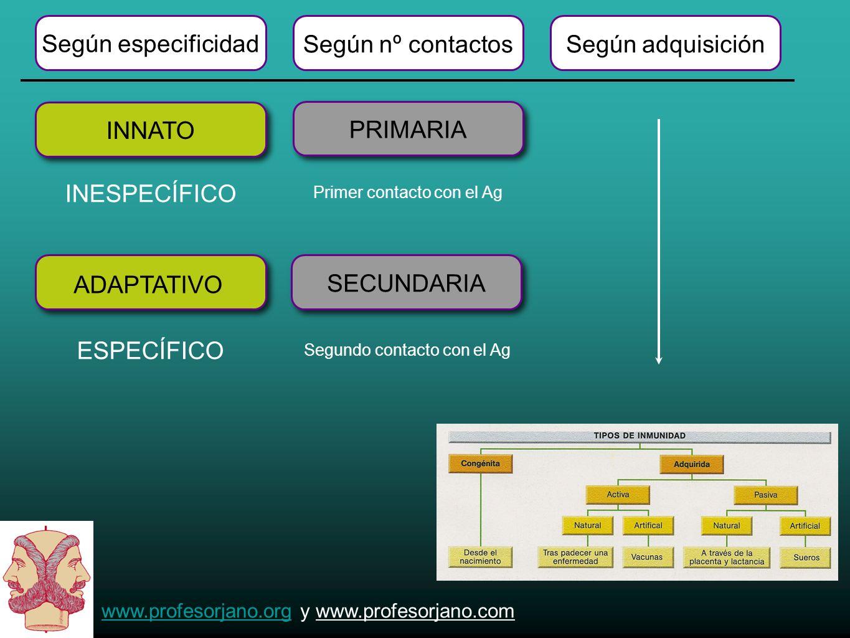 www.profesorjano.orgwww.profesorjano.org y www.profesorjano.com Según especificidad Según nº contactosSegún adquisición INNATO INESPECÍFICO ESPECÍFICO