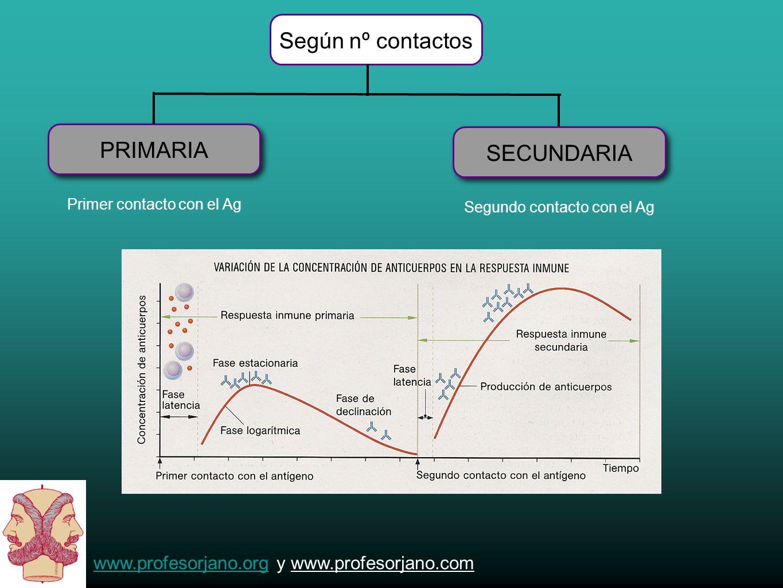 www.profesorjano.orgwww.profesorjano.org y www.profesorjano.com SEGÚN ADQUISICIÓN PASIVA ACTIVA S U E R O S - Poco duradera - NO genera memoria - A partir de animales infectados Es una disolución de inmunoglobulinas que se inyectan en el paciente.