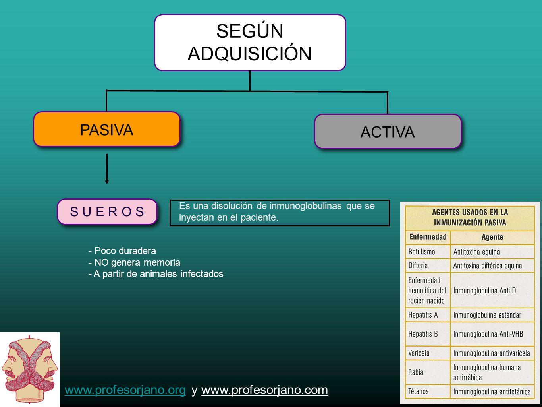www.profesorjano.orgwww.profesorjano.org y www.profesorjano.com SEGÚN ADQUISICIÓN PASIVA ACTIVA S U E R O S - Poco duradera - NO genera memoria - A pa