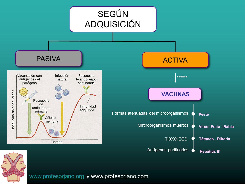www.profesorjano.orgwww.profesorjano.org y www.profesorjano.com SEGÚN ADQUISICIÓN ACTIVA PASIVA VACUNAS mediante Formas atenuadas del microorganismos