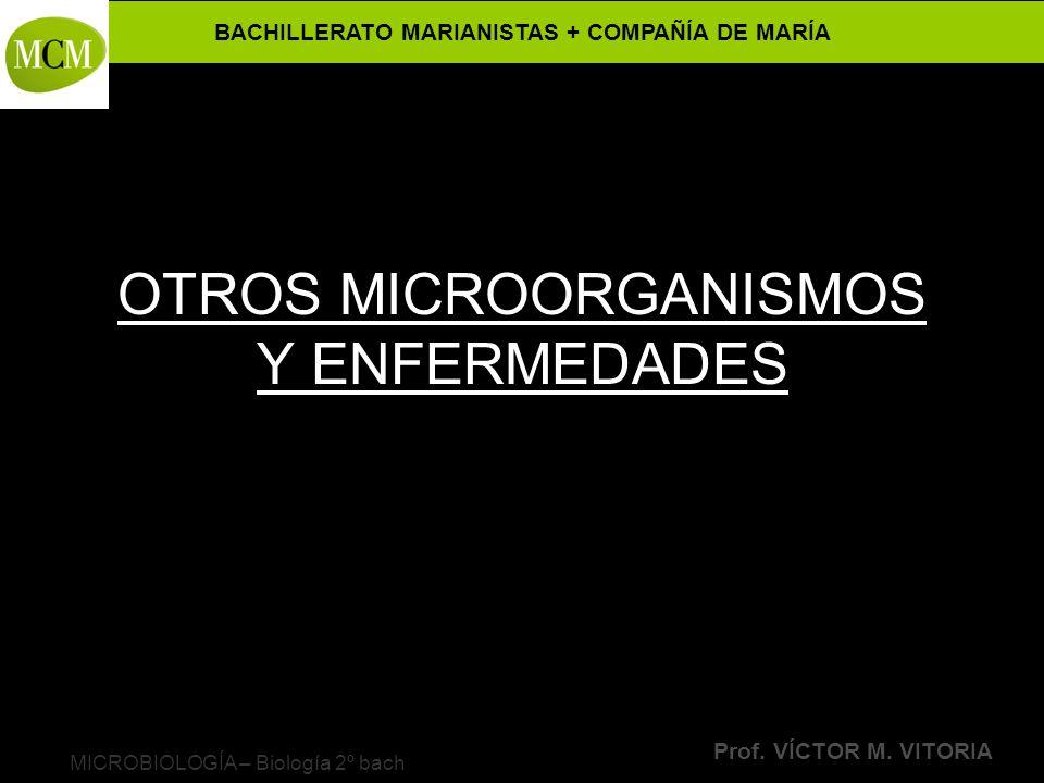 BACHILLERATO MARIANISTAS + COMPAÑÍA DE MARÍA Prof. VÍCTOR M. VITORIA MICROBIOLOGÍA – Biología 2º bach OTROS MICROORGANISMOS Y ENFERMEDADES