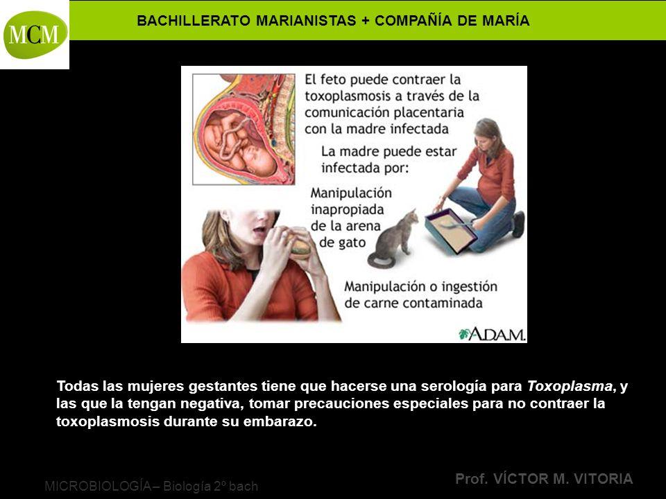 BACHILLERATO MARIANISTAS + COMPAÑÍA DE MARÍA Prof. VÍCTOR M. VITORIA MICROBIOLOGÍA – Biología 2º bach Todas las mujeres gestantes tiene que hacerse un