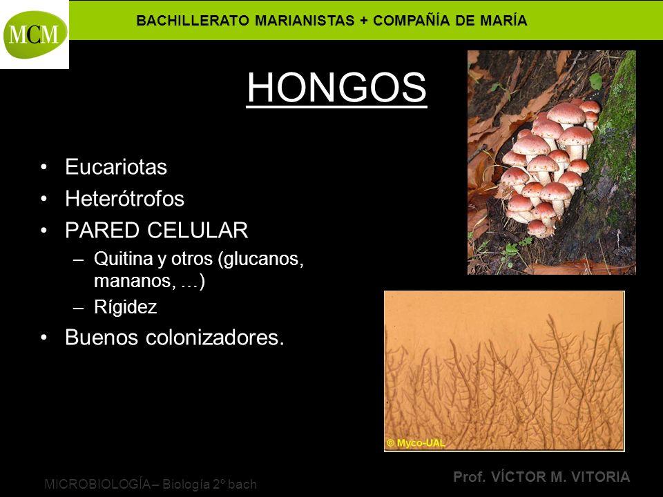 BACHILLERATO MARIANISTAS + COMPAÑÍA DE MARÍA Prof. VÍCTOR M. VITORIA MICROBIOLOGÍA – Biología 2º bach HONGOS Eucariotas Heterótrofos PARED CELULAR –Qu
