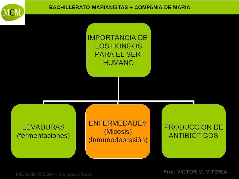 BACHILLERATO MARIANISTAS + COMPAÑÍA DE MARÍA Prof. VÍCTOR M. VITORIA MICROBIOLOGÍA – Biología 2º bach IMPORTANCIA DE LOS HONGOS PARA EL SER HUMANO LEV