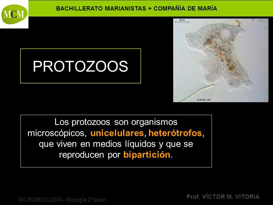 BACHILLERATO MARIANISTAS + COMPAÑÍA DE MARÍA Prof. VÍCTOR M. VITORIA MICROBIOLOGÍA – Biología 2º bach PROTOZOOS Los protozoos son organismos microscóp