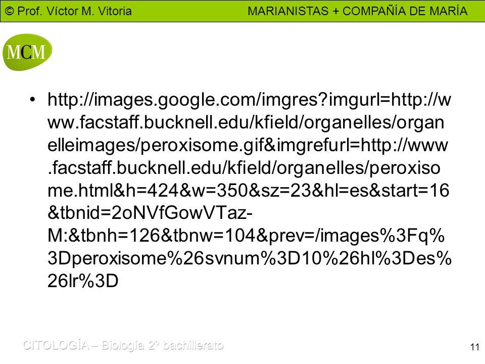© Prof. Víctor M. Vitoria MARIANISTAS + COMPAÑÍA DE MARÍA 11 http://images.google.com/imgres?imgurl=http://w ww.facstaff.bucknell.edu/kfield/organelle