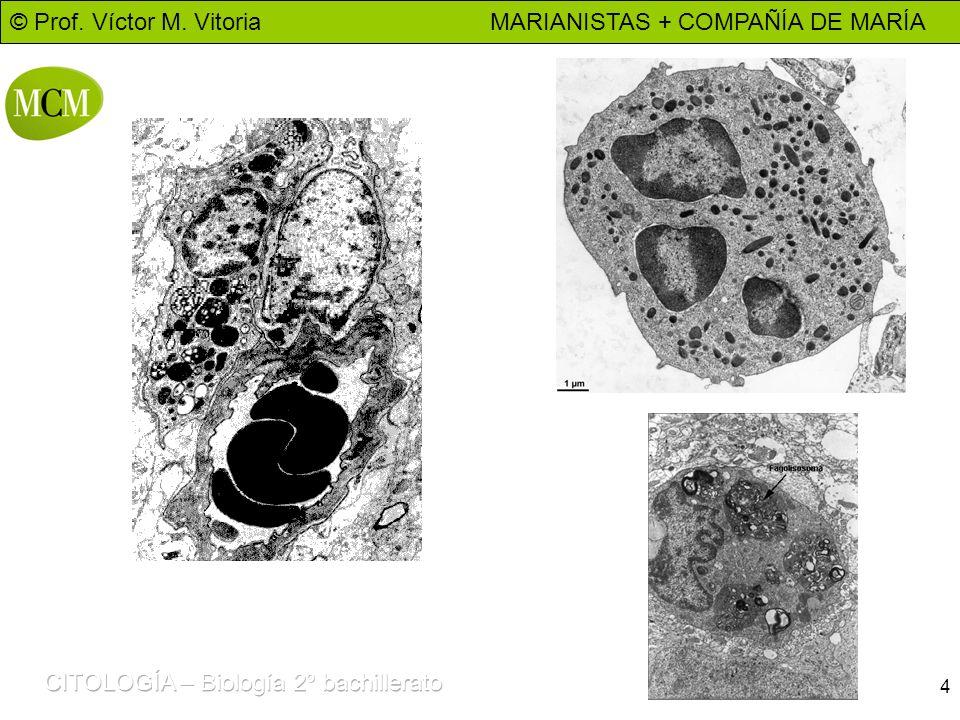 © Prof. Víctor M. Vitoria MARIANISTAS + COMPAÑÍA DE MARÍA 4