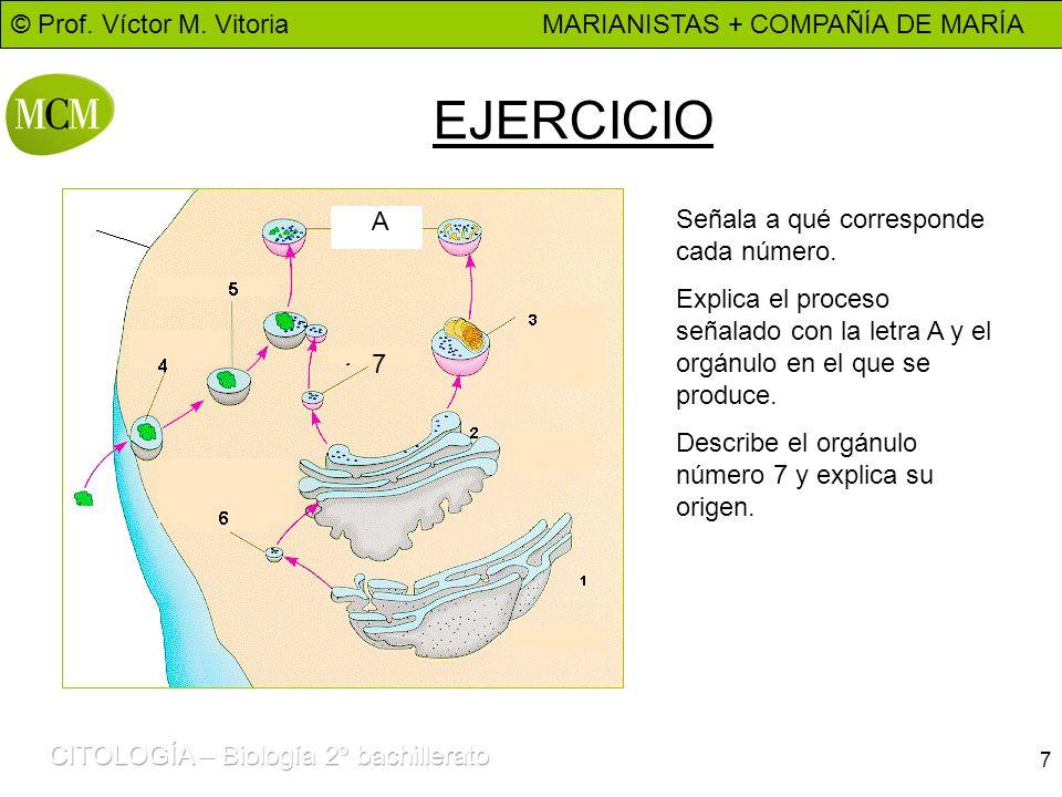 © Prof. Víctor M. Vitoria MARIANISTAS + COMPAÑÍA DE MARÍA 7 EJERCICIO Señala a qué corresponde cada número. Explica el proceso señalado con la letra A