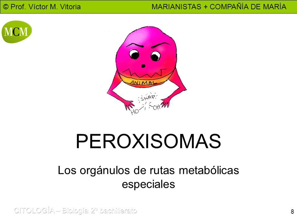 © Prof. Víctor M. Vitoria MARIANISTAS + COMPAÑÍA DE MARÍA 8 PEROXISOMAS Los orgánulos de rutas metabólicas especiales