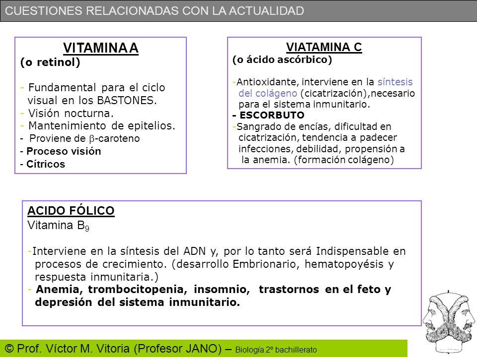 CUESTIONES RELACIONADAS CON LA ACTUALIDAD © Prof. Víctor M. Vitoria (Profesor JANO) – Biología 2º bachillerato VITAMINA A (o retinol) - Fundamental pa