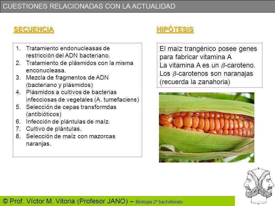 CUESTIONES RELACIONADAS CON LA ACTUALIDAD © Prof. Víctor M. Vitoria (Profesor JANO) – Biología 2º bachillerato SECUENCIA 1.Tratamiento endonucleasas d