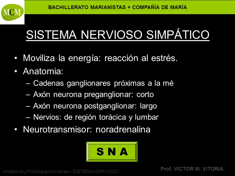 BACHILLERATO MARIANISTAS + COMPAÑÍA DE MARÍA Prof. VÍCTOR M. VITORIA Anatomía y Fisiología Humanas – SISTEMA NERVIOSO SISTEMA NERVIOSO SIMPÁTICO Movil