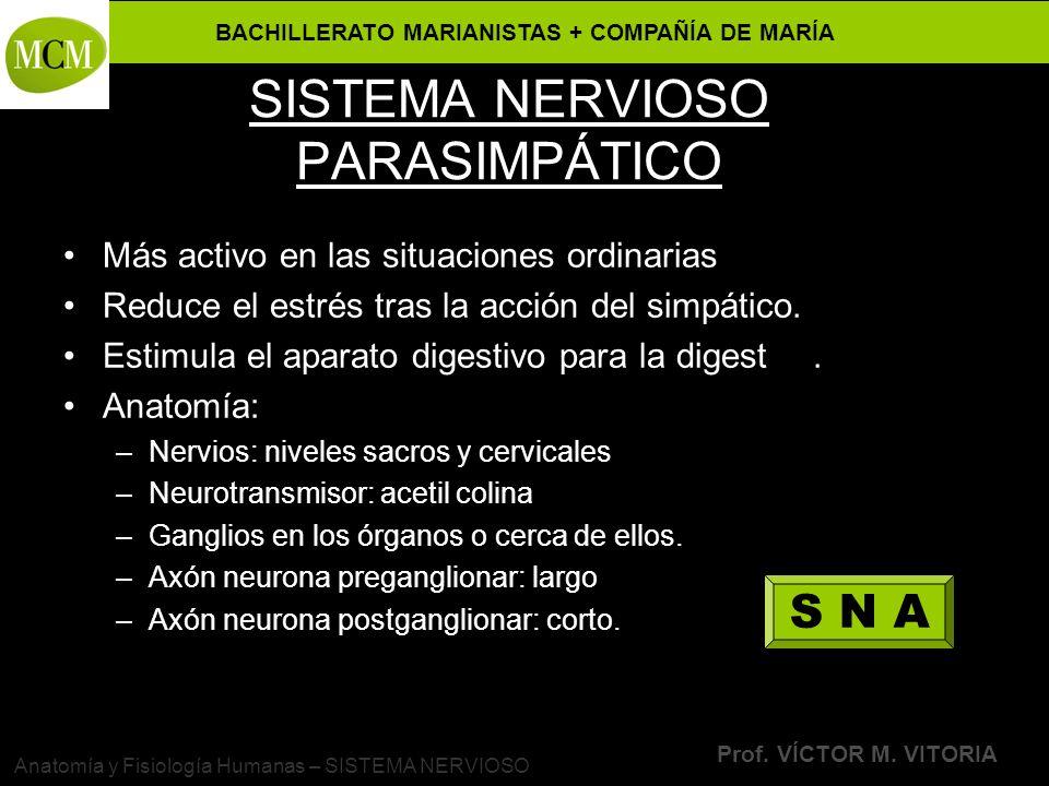 BACHILLERATO MARIANISTAS + COMPAÑÍA DE MARÍA Prof. VÍCTOR M. VITORIA Anatomía y Fisiología Humanas – SISTEMA NERVIOSO SISTEMA NERVIOSO PARASIMPÁTICO M