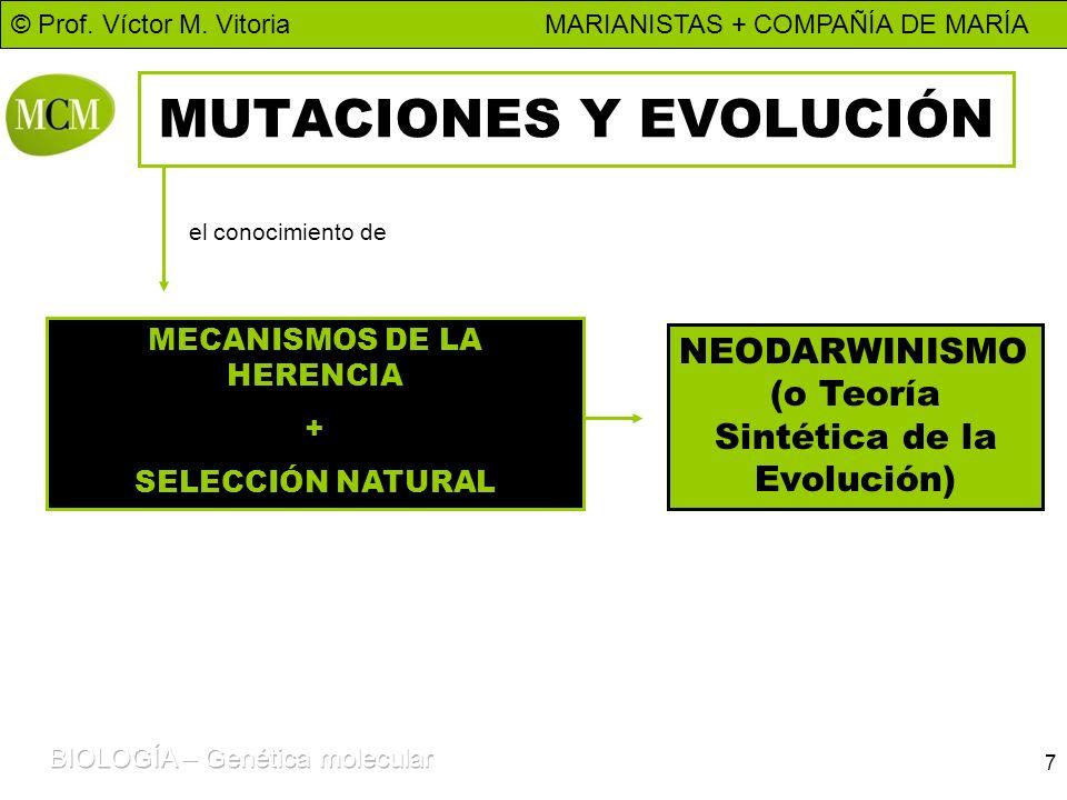 © Prof. Víctor M. Vitoria MARIANISTAS + COMPAÑÍA DE MARÍA 7 MUTACIONES Y EVOLUCIÓN MECANISMOS DE LA HERENCIA + SELECCIÓN NATURAL NEODARWINISMO (o Teor