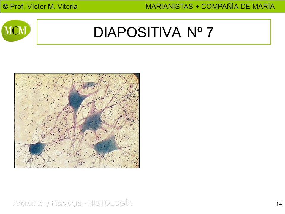 © Prof. Víctor M. Vitoria MARIANISTAS + COMPAÑÍA DE MARÍA 14 DIAPOSITIVA Nº 7
