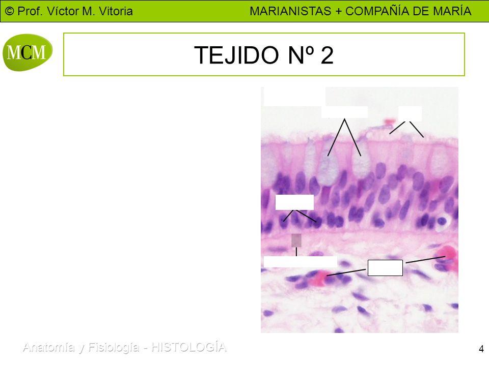 © Prof. Víctor M. Vitoria MARIANISTAS + COMPAÑÍA DE MARÍA 4 TEJIDO Nº 2