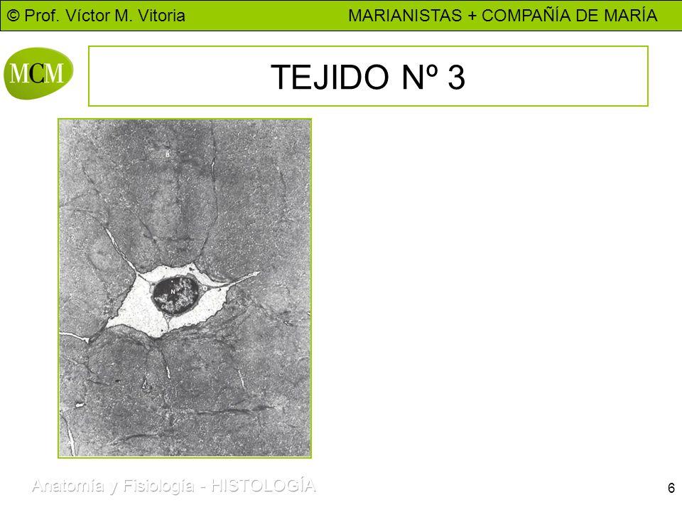 © Prof. Víctor M. Vitoria MARIANISTAS + COMPAÑÍA DE MARÍA 6 TEJIDO Nº 3