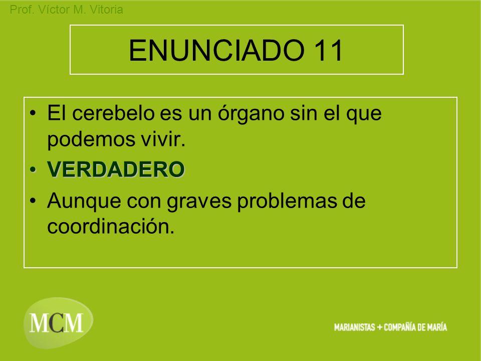 Prof. Víctor M. Vitoria ENUNCIADO 11 El cerebelo es un órgano sin el que podemos vivir. VERDADEROVERDADERO Aunque con graves problemas de coordinación