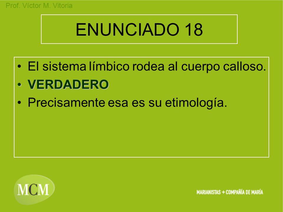 Prof. Víctor M. Vitoria ENUNCIADO 18 El sistema límbico rodea al cuerpo calloso. VERDADEROVERDADERO Precisamente esa es su etimología.