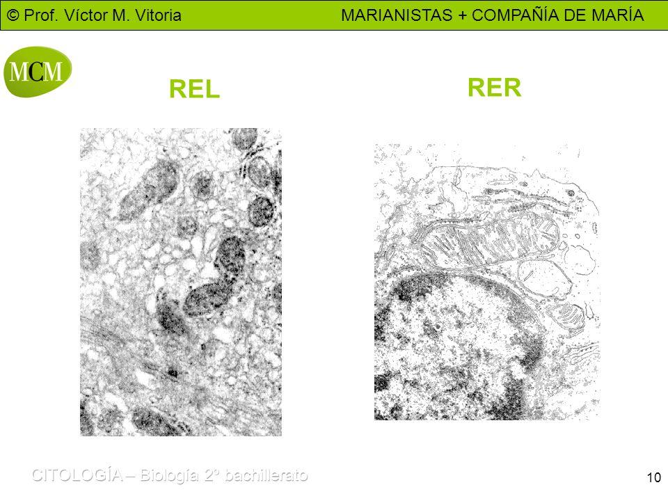 © Prof. Víctor M. Vitoria MARIANISTAS + COMPAÑÍA DE MARÍA 10 REL RER