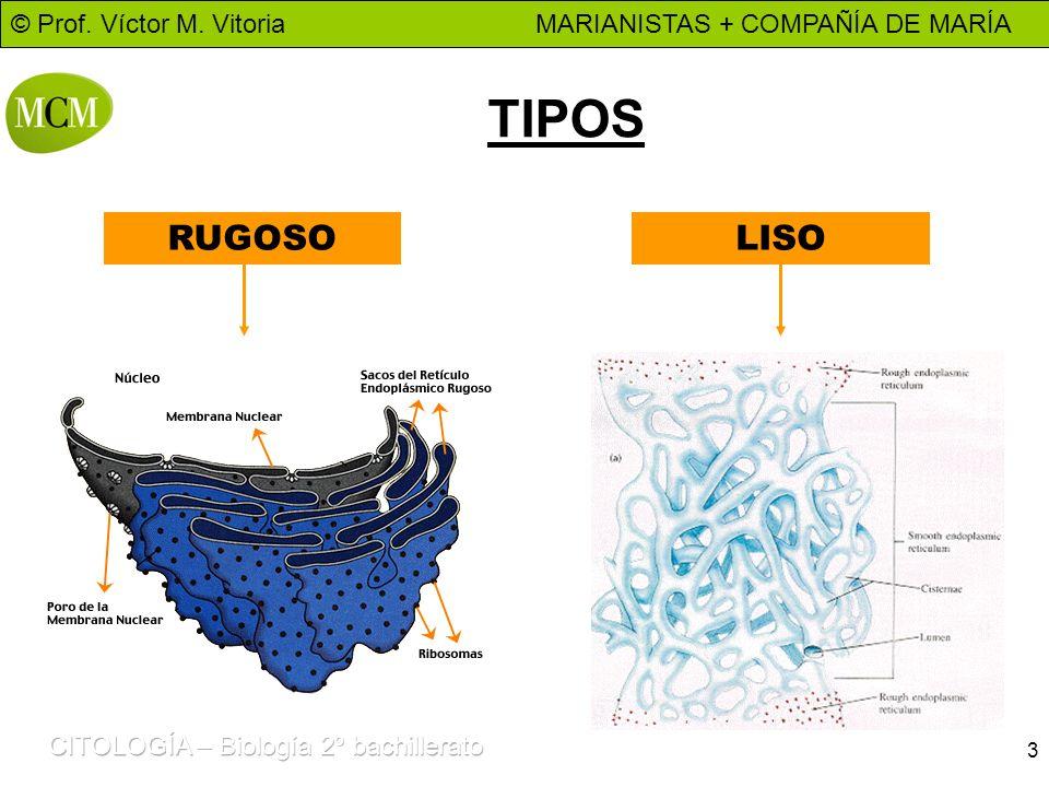 © Prof. Víctor M. Vitoria MARIANISTAS + COMPAÑÍA DE MARÍA 3 TIPOS RUGOSOLISO