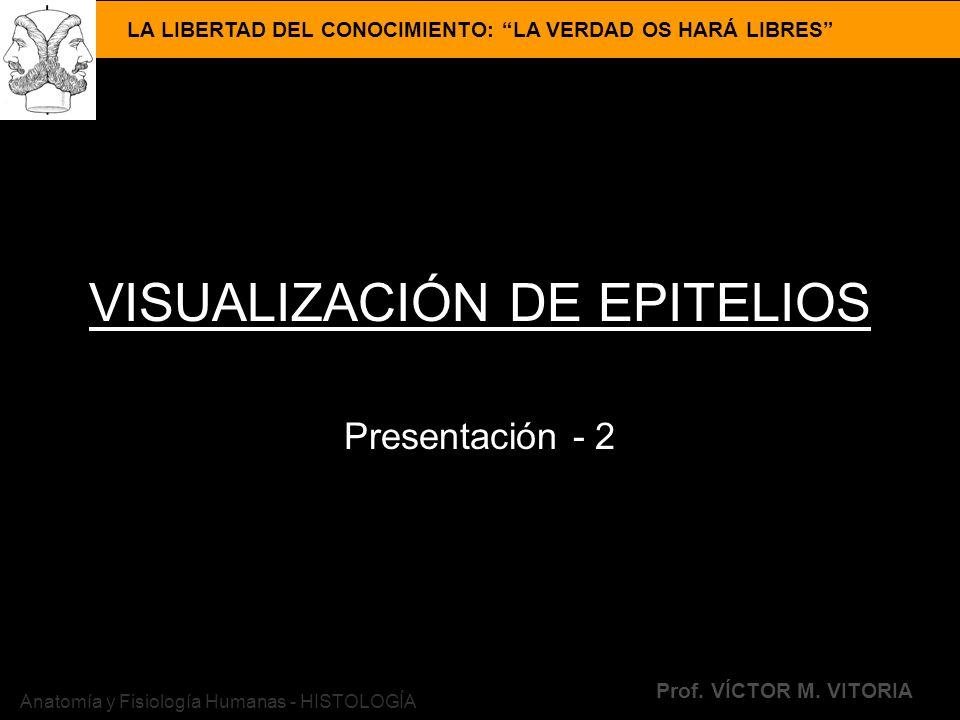 LA LIBERTAD DEL CONOCIMIENTO: LA VERDAD OS HARÁ LIBRES Prof. VÍCTOR M. VITORIA Anatomía y Fisiología Humanas - HISTOLOGÍA VISUALIZACIÓN DE EPITELIOS P