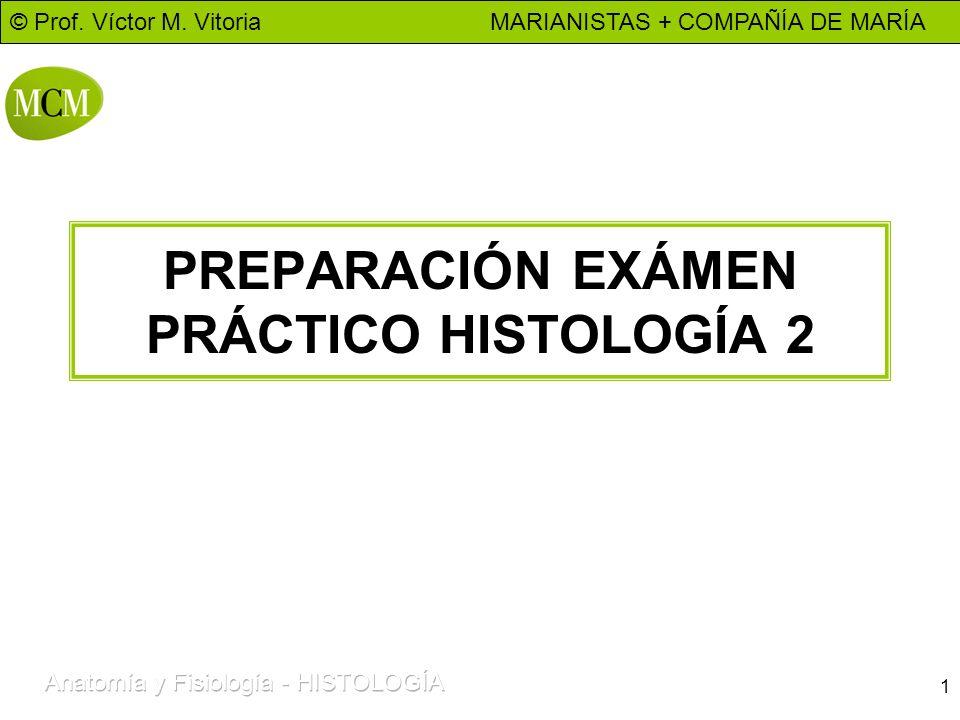 © Prof. Víctor M. Vitoria MARIANISTAS + COMPAÑÍA DE MARÍA 1 PREPARACIÓN EXÁMEN PRÁCTICO HISTOLOGÍA 2