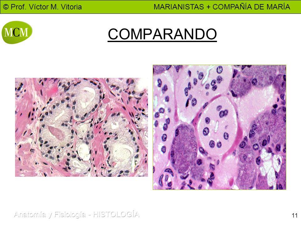 © Prof. Víctor M. Vitoria MARIANISTAS + COMPAÑÍA DE MARÍA 11 COMPARANDO