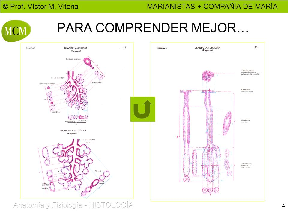 © Prof. Víctor M. Vitoria MARIANISTAS + COMPAÑÍA DE MARÍA 4 PARA COMPRENDER MEJOR…